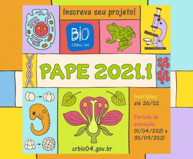 PAPE - elementos coloridos-02